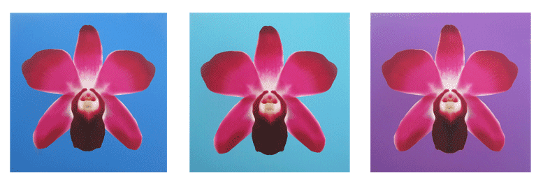 Orchid Fine Art Collection