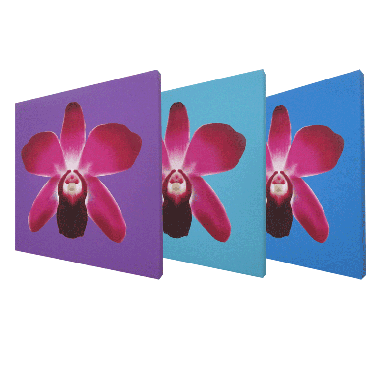 Orchid Art Collection