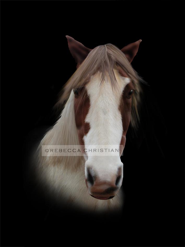 Equine Artist