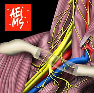 Professional Member Association Medical Scientific Illustrators